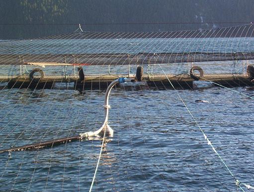 fish feed pellet spinner